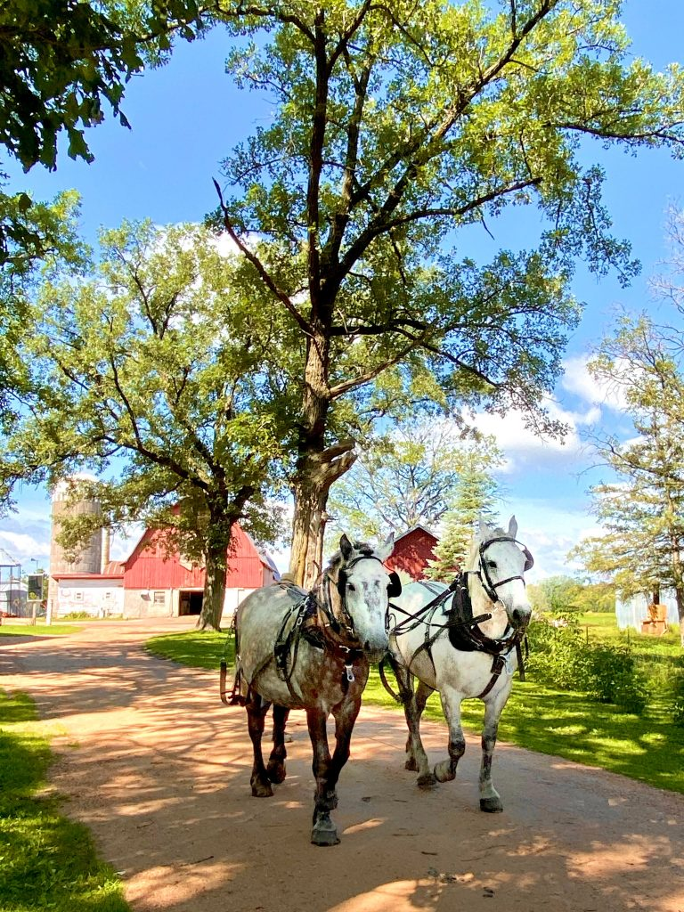 Birchwood Wisconsin's Best Cabin Town