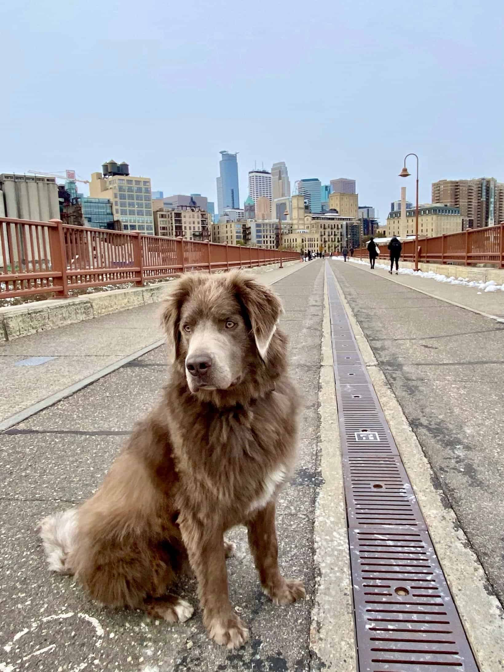 things to do in northeast minneapolis